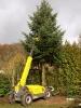Weihnachtsbaum 2015JG_UPLOAD_IMAGENAME_SEPARATOR26
