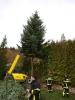 Weihnachtsbaum 2015JG_UPLOAD_IMAGENAME_SEPARATOR27