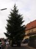 Weihnachtsbaum 2015JG_UPLOAD_IMAGENAME_SEPARATOR32