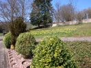 Fruehling in KrottelbachJG_UPLOAD_IMAGENAME_SEPARATOR11