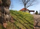Fruehling in KrottelbachJG_UPLOAD_IMAGENAME_SEPARATOR16