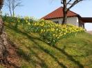 Fruehling in KrottelbachJG_UPLOAD_IMAGENAME_SEPARATOR17