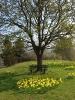 Fruehling in KrottelbachJG_UPLOAD_IMAGENAME_SEPARATOR29