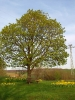 Fruehling in KrottelbachJG_UPLOAD_IMAGENAME_SEPARATOR33