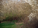 Fruehling in KrottelbachJG_UPLOAD_IMAGENAME_SEPARATOR39