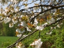 Fruehling in KrottelbachJG_UPLOAD_IMAGENAME_SEPARATOR51