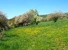 Fruehling in KrottelbachJG_UPLOAD_IMAGENAME_SEPARATOR57
