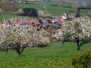 Fruehling in KrottelbachJG_UPLOAD_IMAGENAME_SEPARATOR62